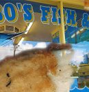Bobo's Fish 'N' Chips – Highton Geelong